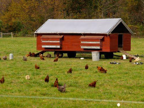 Pollai mobili ~ Mobile chicken coop gallinero pollaio e conigli