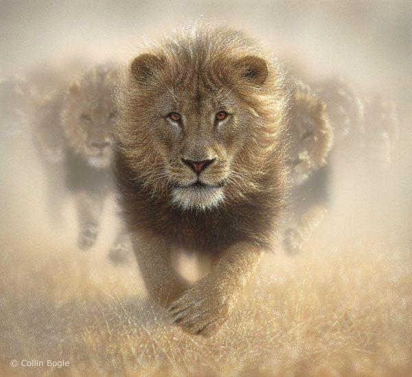Wildlife Paintings Wildlife Art Prints By Artist Collin Bogle Wildlife Paintings Animal Tshirt Lions