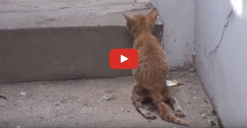 Kitten With Disability Wants To Run With His Mom Cat