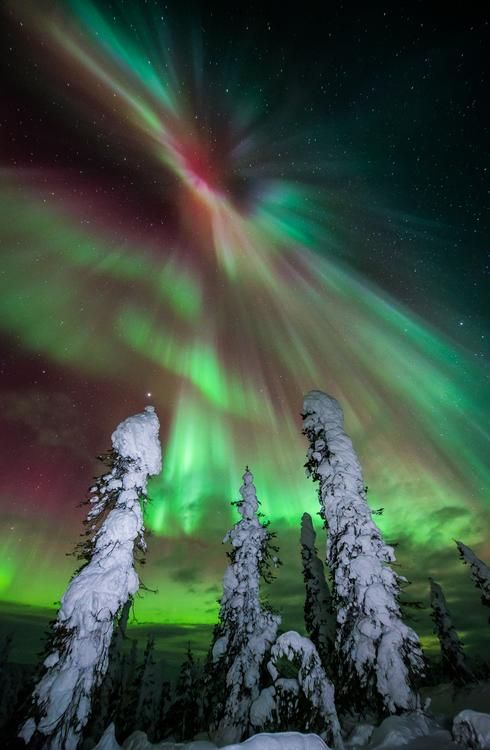 Frozen Forrest Photo by Ronn Murray — National Geographic Your Shot