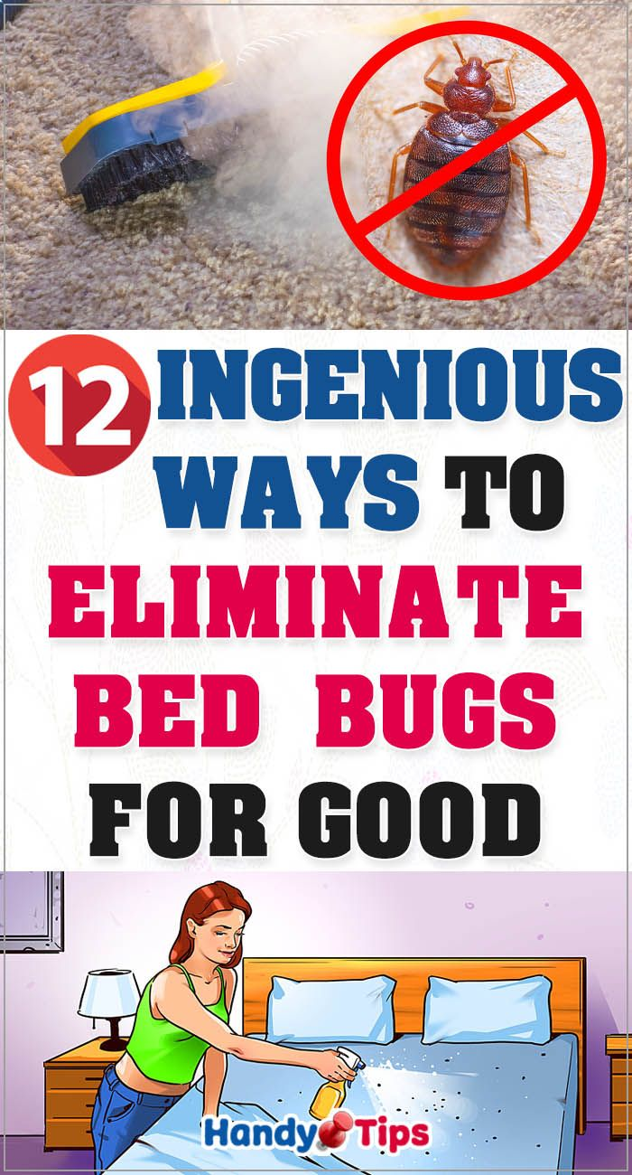 12 Ingenious Ways To Eliminate Bed Bugs for Good Bed