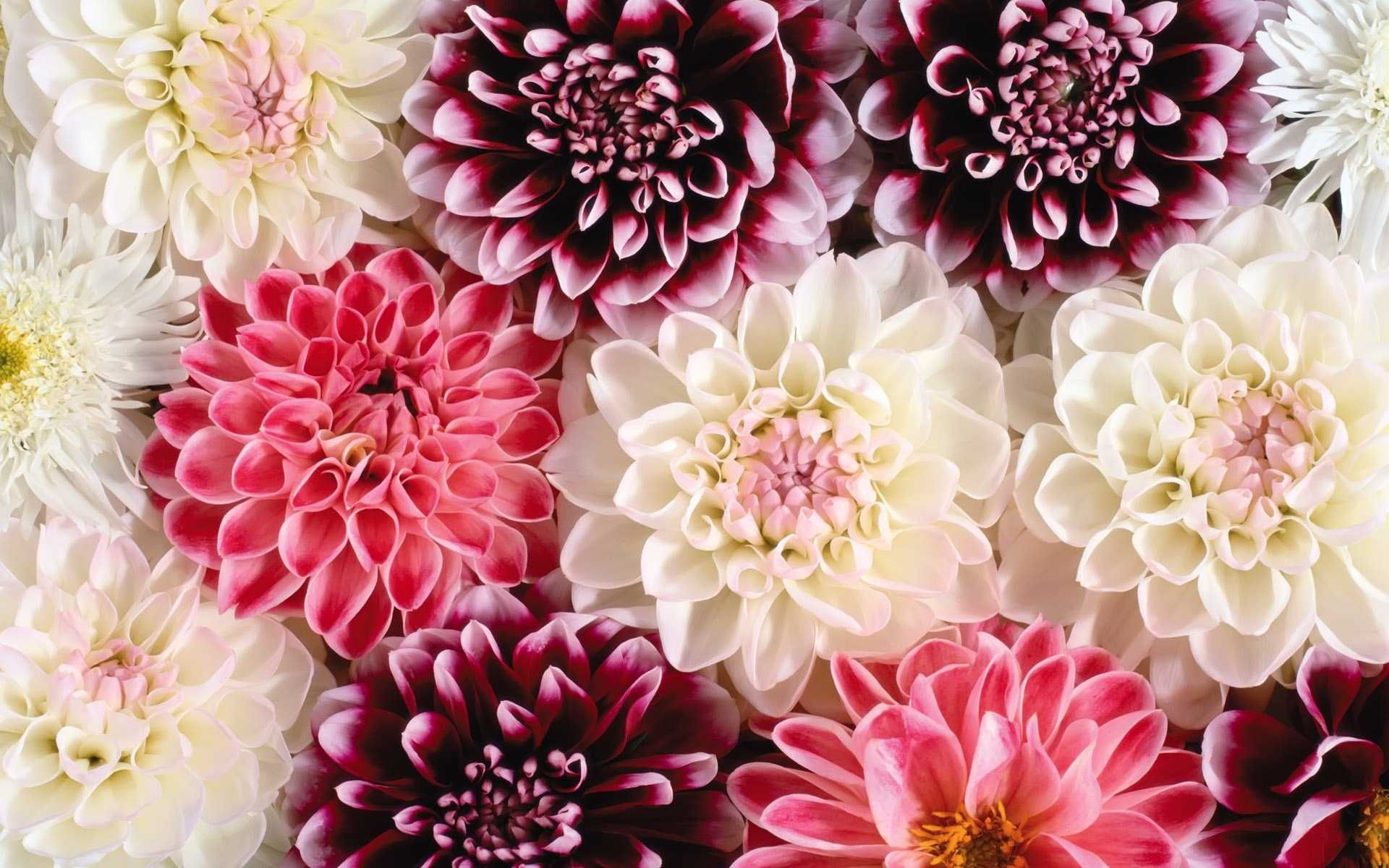 Hd Flower Wallpapers HD Hd Vintage Background Floral ...