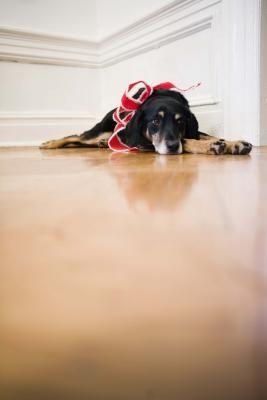 How To Remove Mop Glo From Linoleum Floors Kitchen Floors - How to remove mop and glo from hardwood floors