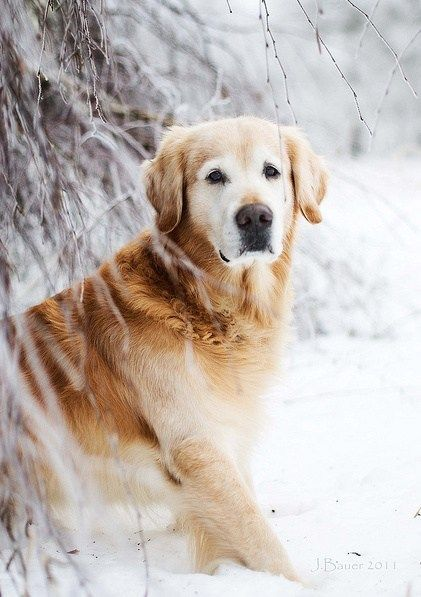 What Cute Animal Reminds Me Of The Golden Retriver From The