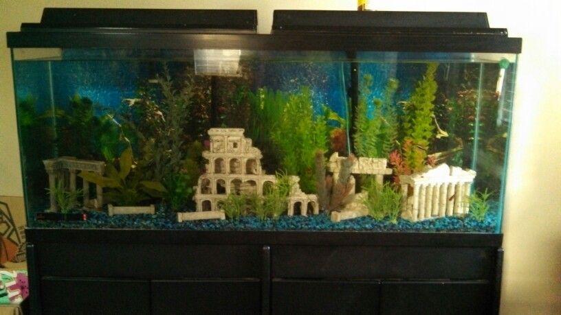 55gal Freshwater Tank Rome Ruins Theme Fish Tank Decorations Cool Fish Tanks Aquarium Fish Tank