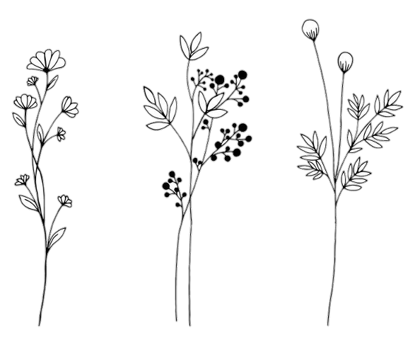Popular And Trending Flower Stickers On Picsart In 2020 Flower Drawing Botanical Line Drawing Wildflower Drawing