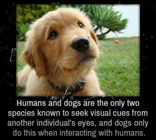 Humans and dogs