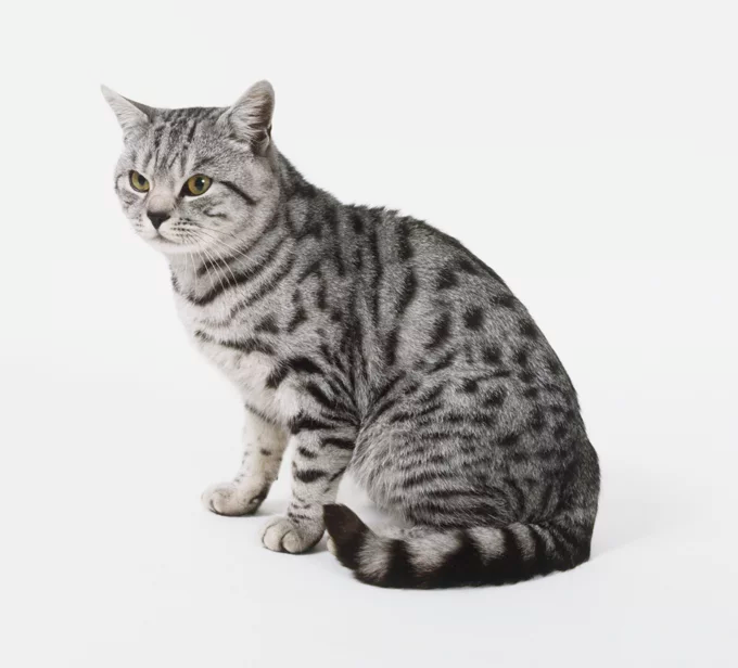 Pin On Cats Breeds And Rescue Cats