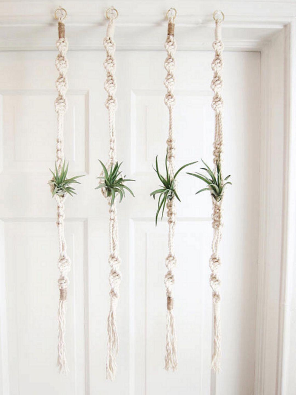 Outstanding 55+ Best Air Plants Ideas For Amazing Home http://decorathing.com/garden-ideas/55-best-air-plants-ideas-for-amazing-home/