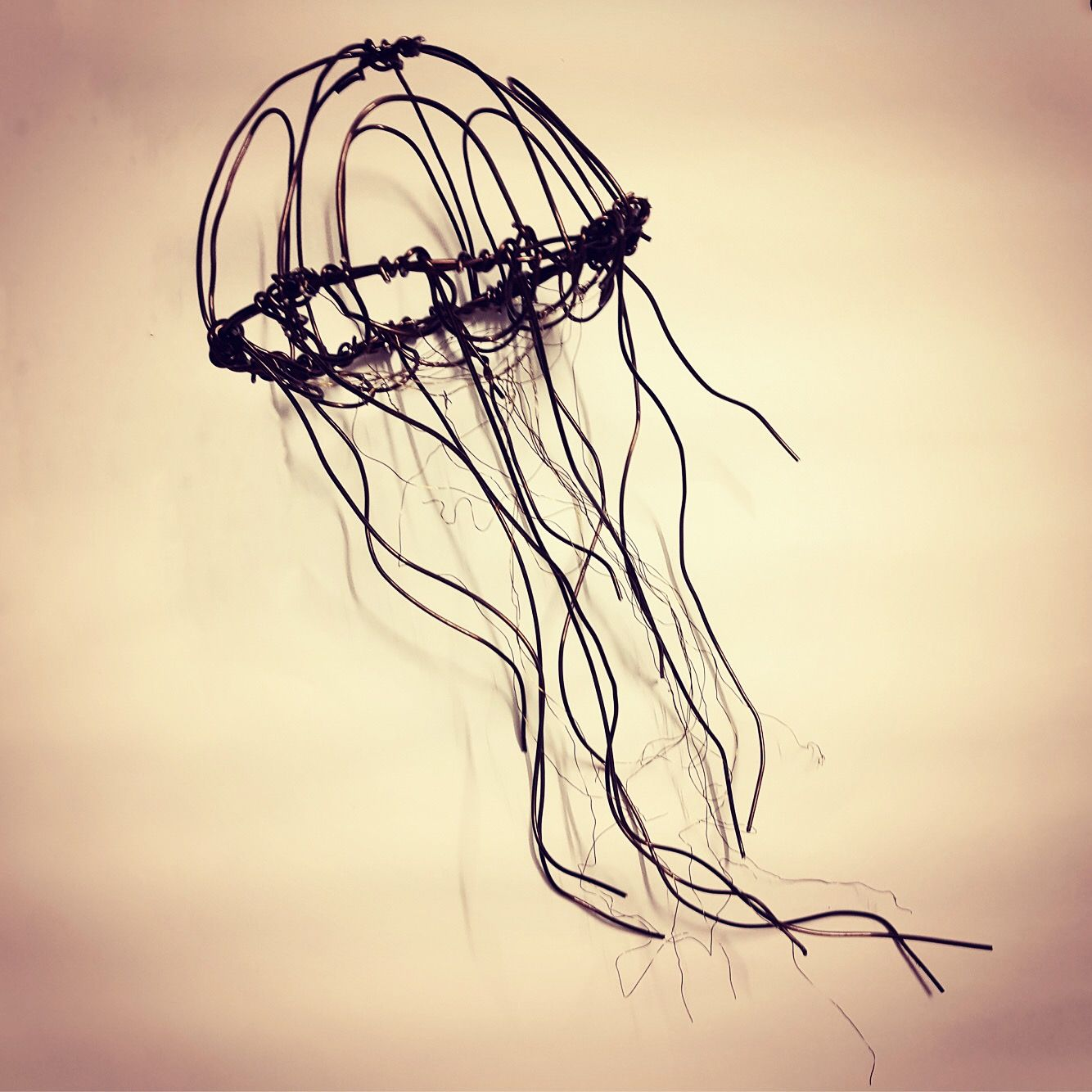 Jellyfish - fascinating creatures that have been bobbing around the ...