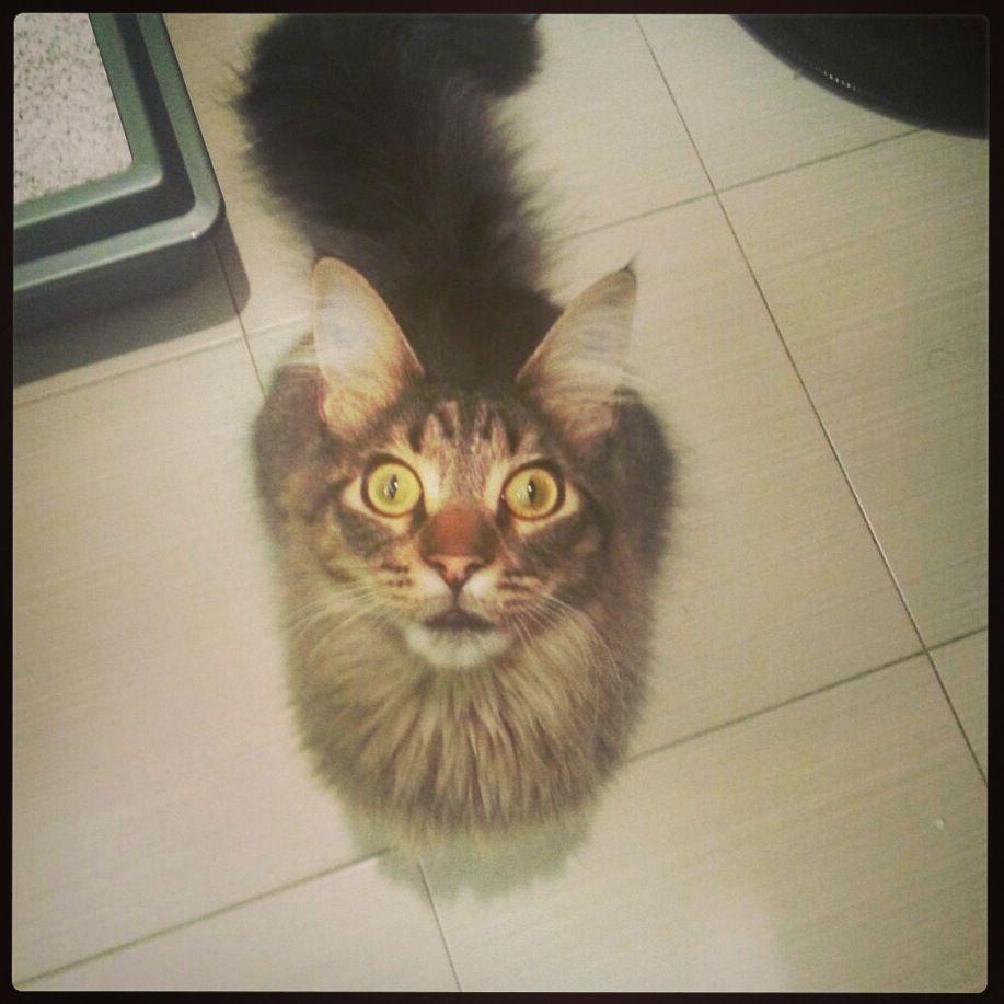 #catsitter