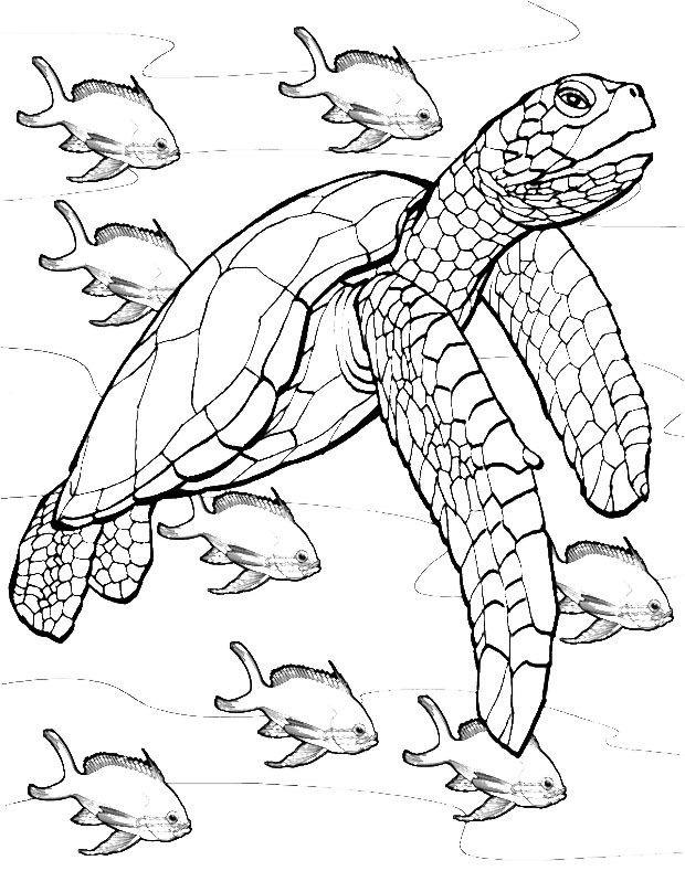 Coloring for adults kleuren voor volwassenen tortues raies requins dauphins etc - Modele dessin requin ...