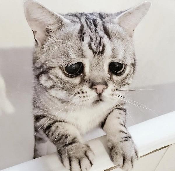 Dünyanın En Mutsuz ve Üzgün Kedisi Luhu ~ Yeşil Parmak #animalesbebébonitos