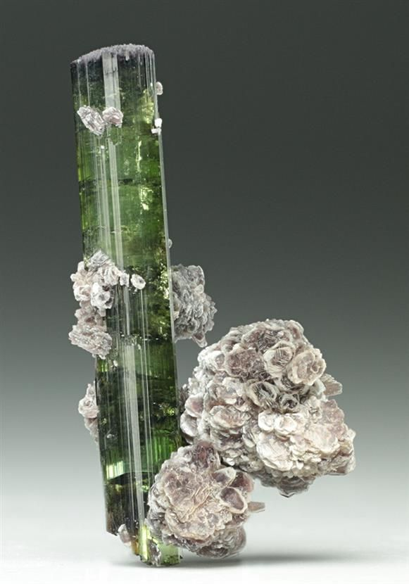 A pleasingly neat specimen of Tourmaline with Lepidolite from the Pederneira Claim/Mine, Doce Valley, Brazil. Lustrous gemmy green in coloured measuring to 3.7cm, associated with pinkish clusters of Lepidolite Mica. Crystal Classics Minerals