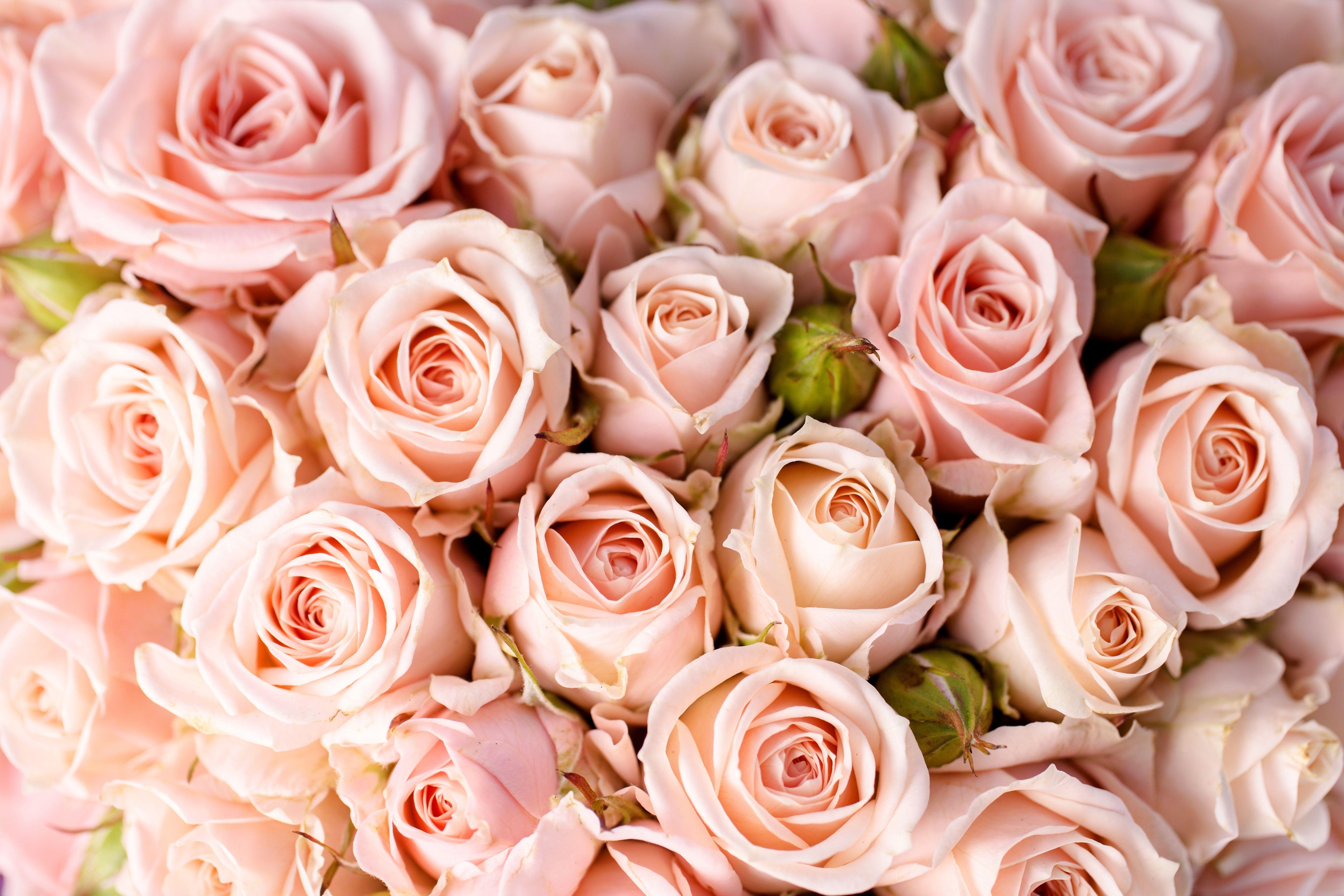 работающий картинки роз в высоком разрешении этом