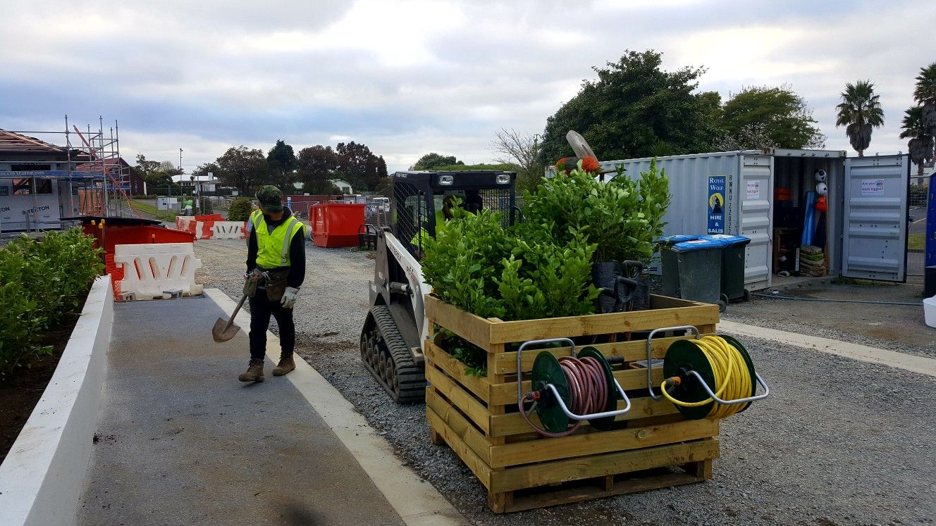 Installation of Griselinia littoralis hedge underway using the skidsteer and custom box #northscape
