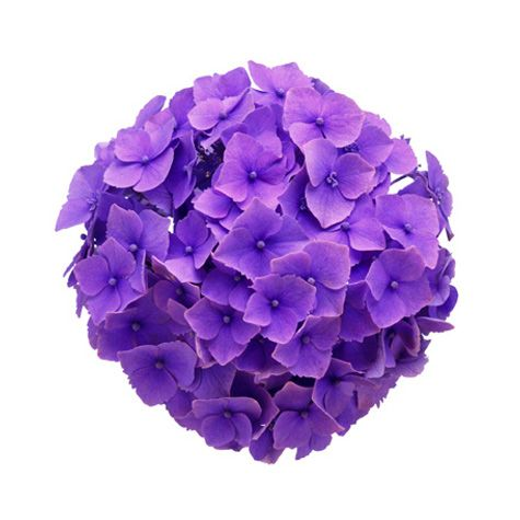 Your Complete Guide To Wedding Flowers Purple Hydrangeas