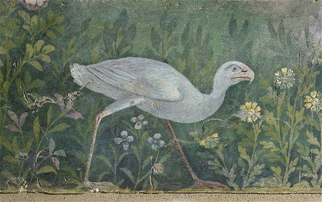Risultati immagini per purple swamp hen pompei fresco