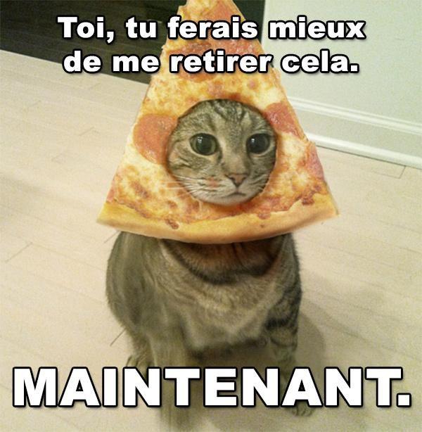 Chat pizza animaux droles chat marrant blague super - Chaton marrant ...