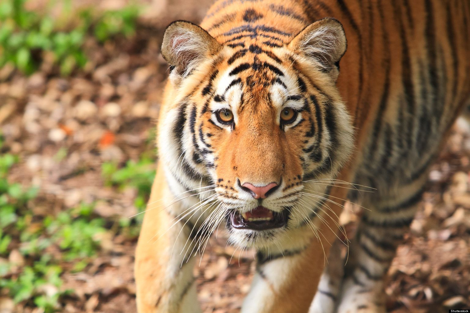 The 10 Best Places to See Wild Animals. Copyright ©2015
