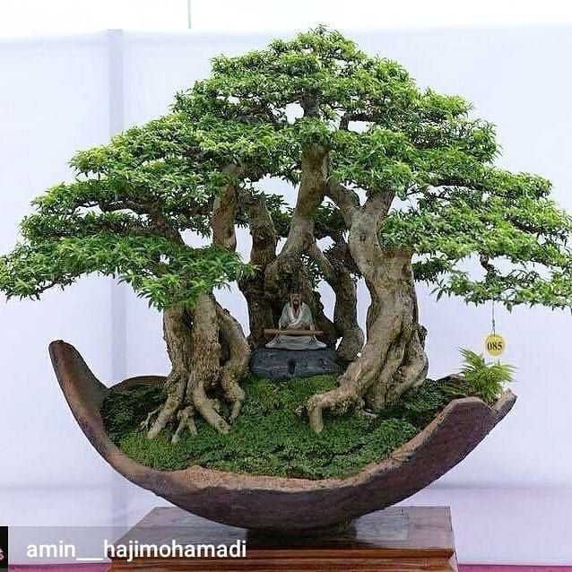 BONSAI CERAMIC TATTOO ART Bonsai tree care, Bonsai