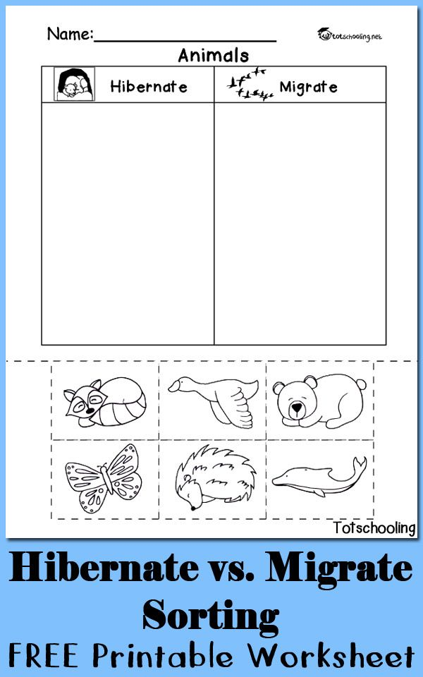 Hibernation Vs Migration Animal Sorting Worksheet Teaching