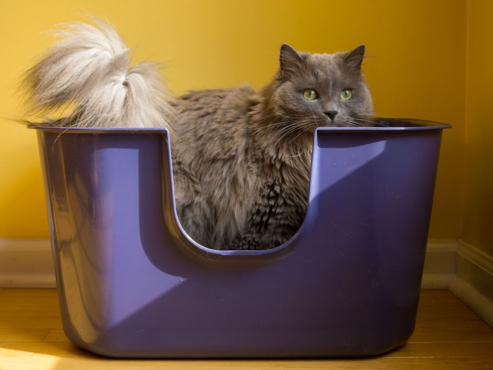 Does Your Cat Think Outside the Box? Best cat litter