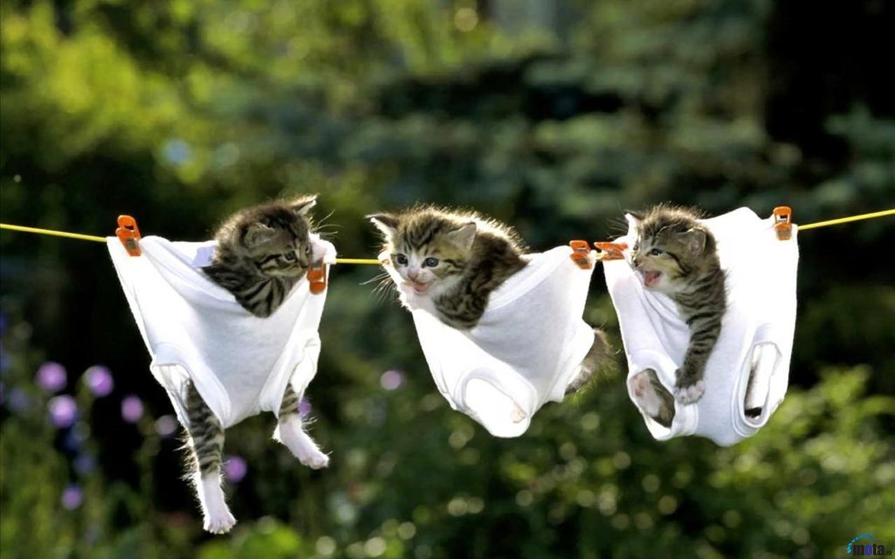 Free Kittens Wallpaper For Desktop