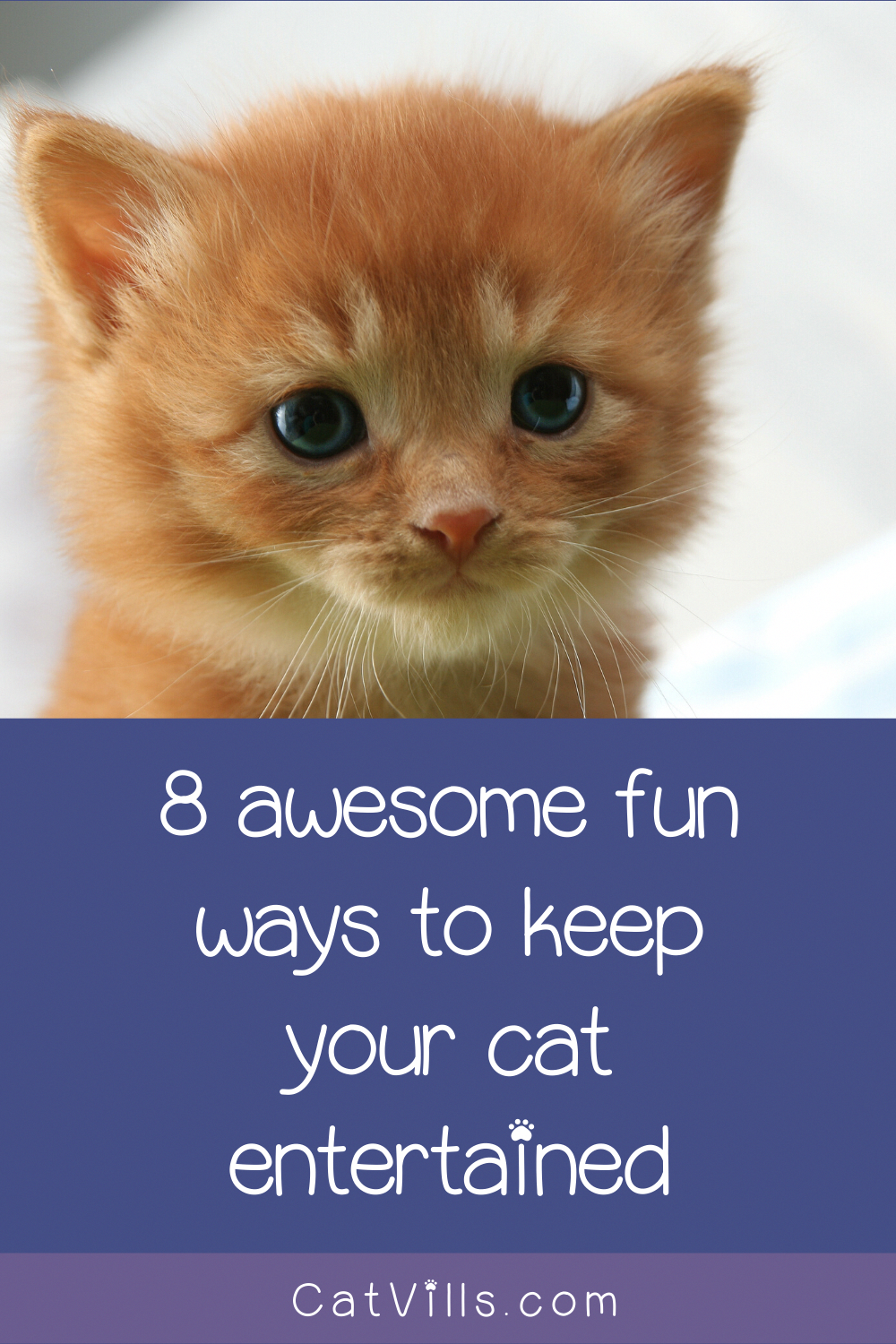 Your Best Cat Training Tips And Tricks In 2020 Cat Training Pet Care Dogs Cats
