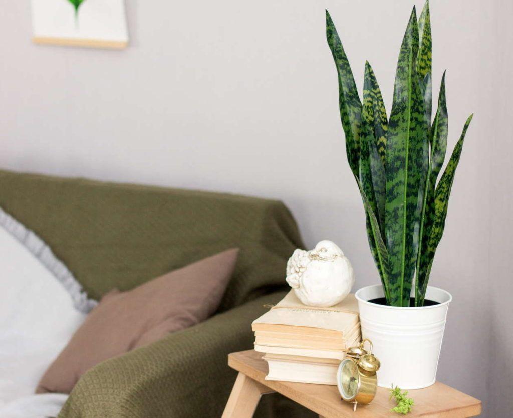 Pflanzen im Schlafzimmer: Diese Sorten eignen sich  Schlafzimmer