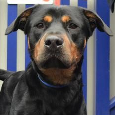 Eddie at Battersea Dogs Home