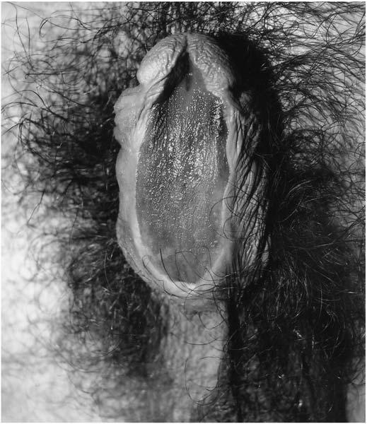 ce hormon provoacă o erecție noua tehnologie a penisului
