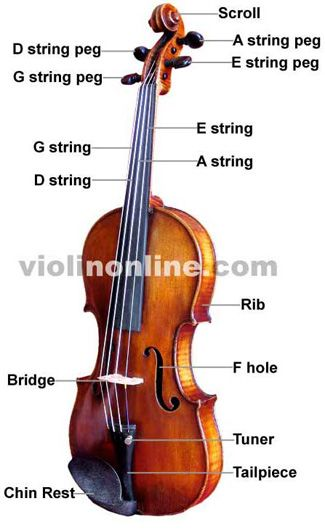Violin Basics  Interactive Fingering Charts  Musical Instruments