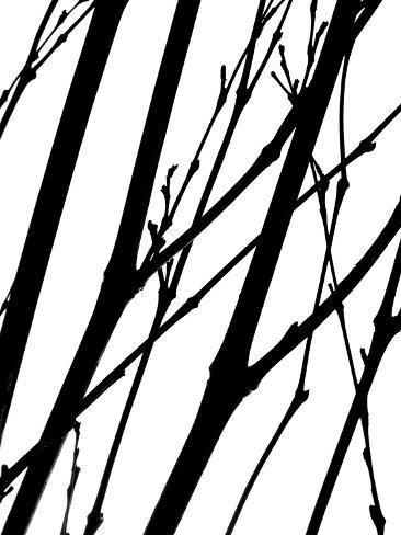 size: 24x18in Photographic Print: Branch Silhouette II by Monika Burkhart :