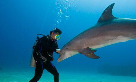 marine biologist Career Pinterest - marine biologist job description