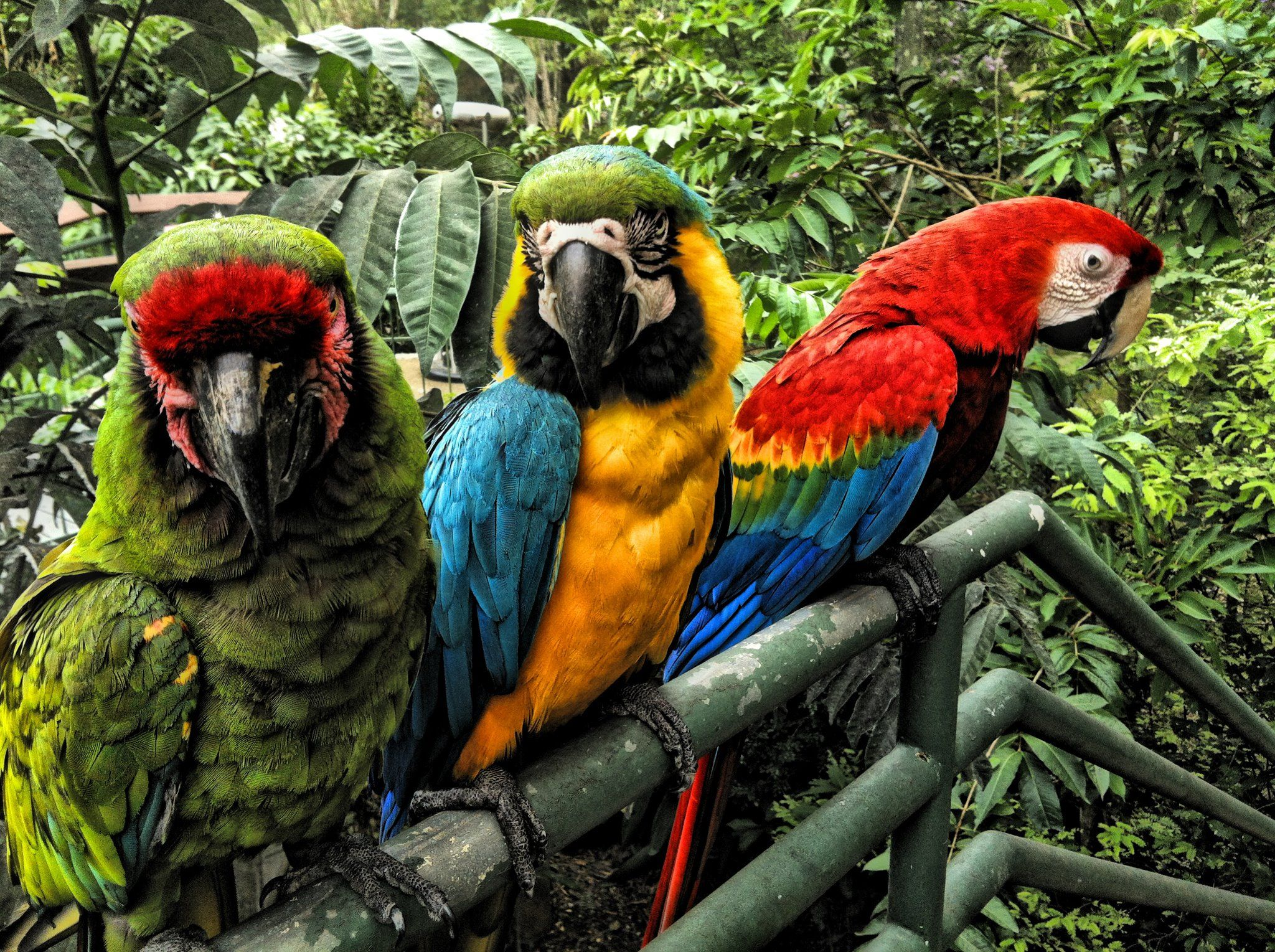 Zool Gico De Mayag Ez Native Parrots At The Mayag Ez Zoo In  # Muebles Gepetto Mora