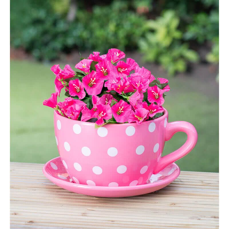 15 Amazing Teacup Gardens For Your Home With Images Tea Cup Planter Tea Cups Teacup Gardens