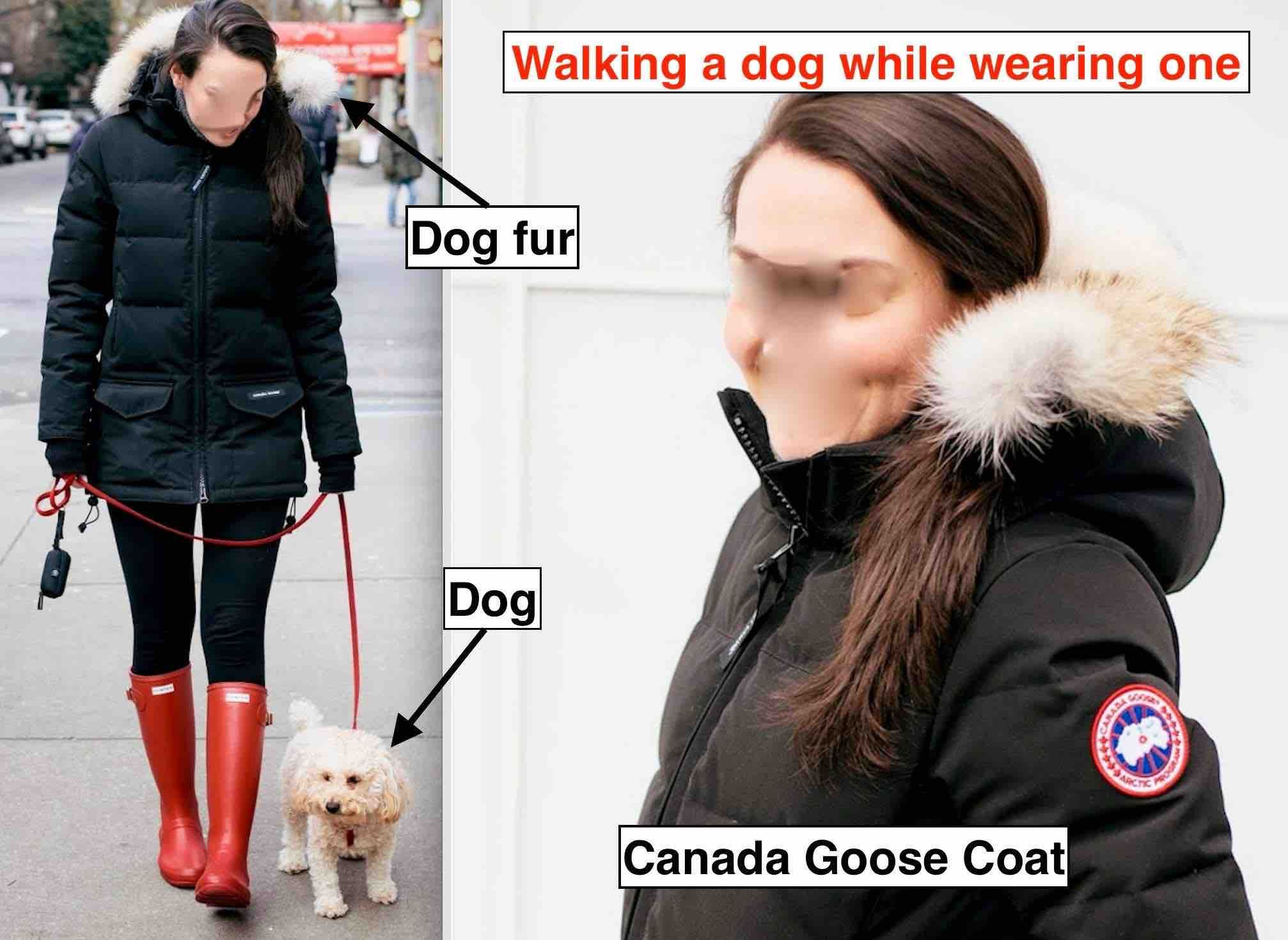 canada goose jacket dog fur