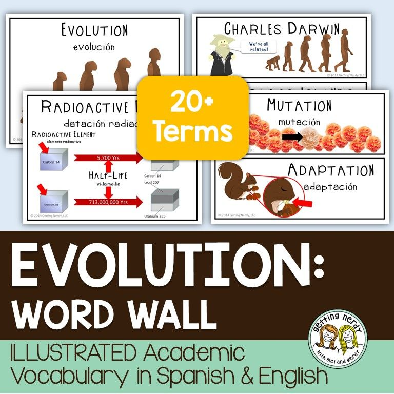 Evolution Word Wall Evolution Activities Science Evolution