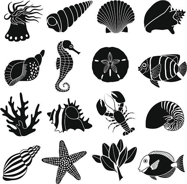 Image Result For Sea Creature Clipart Black And White Sea Creatures Art Sea Creatures Creature Art