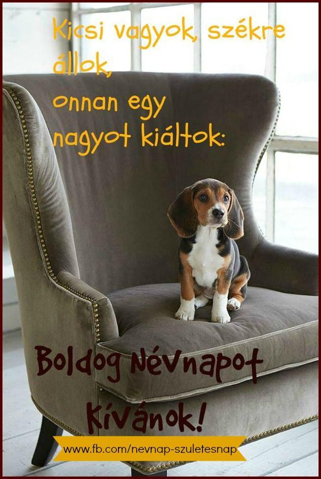 boldog névnapot kívánok vicces Akinak kivanunk boldog nevnapot! Gina,Horst,Beus | Nameday  boldog névnapot kívánok vicces