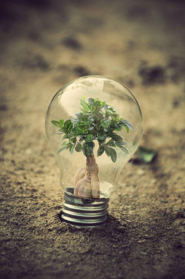 ideia verde