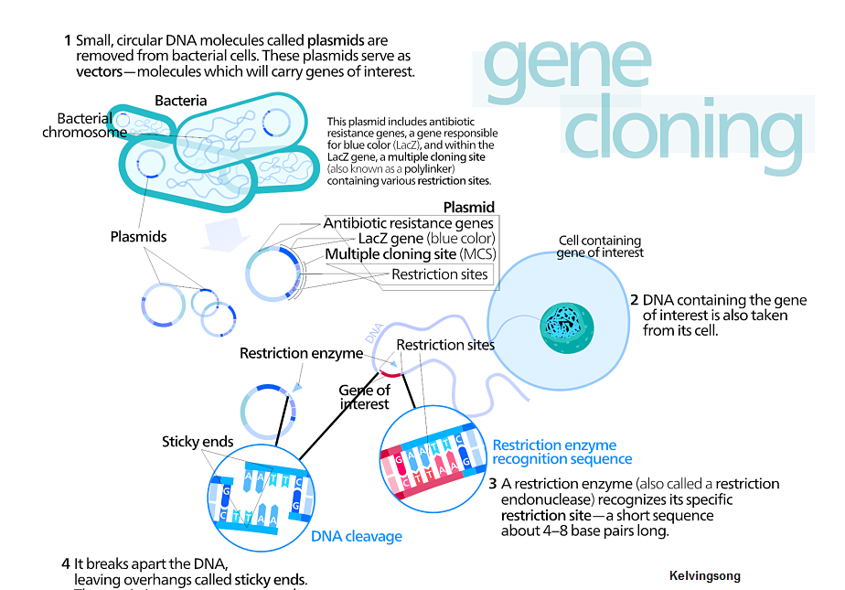 Recombinant Dna Technology Mcqs With Answers