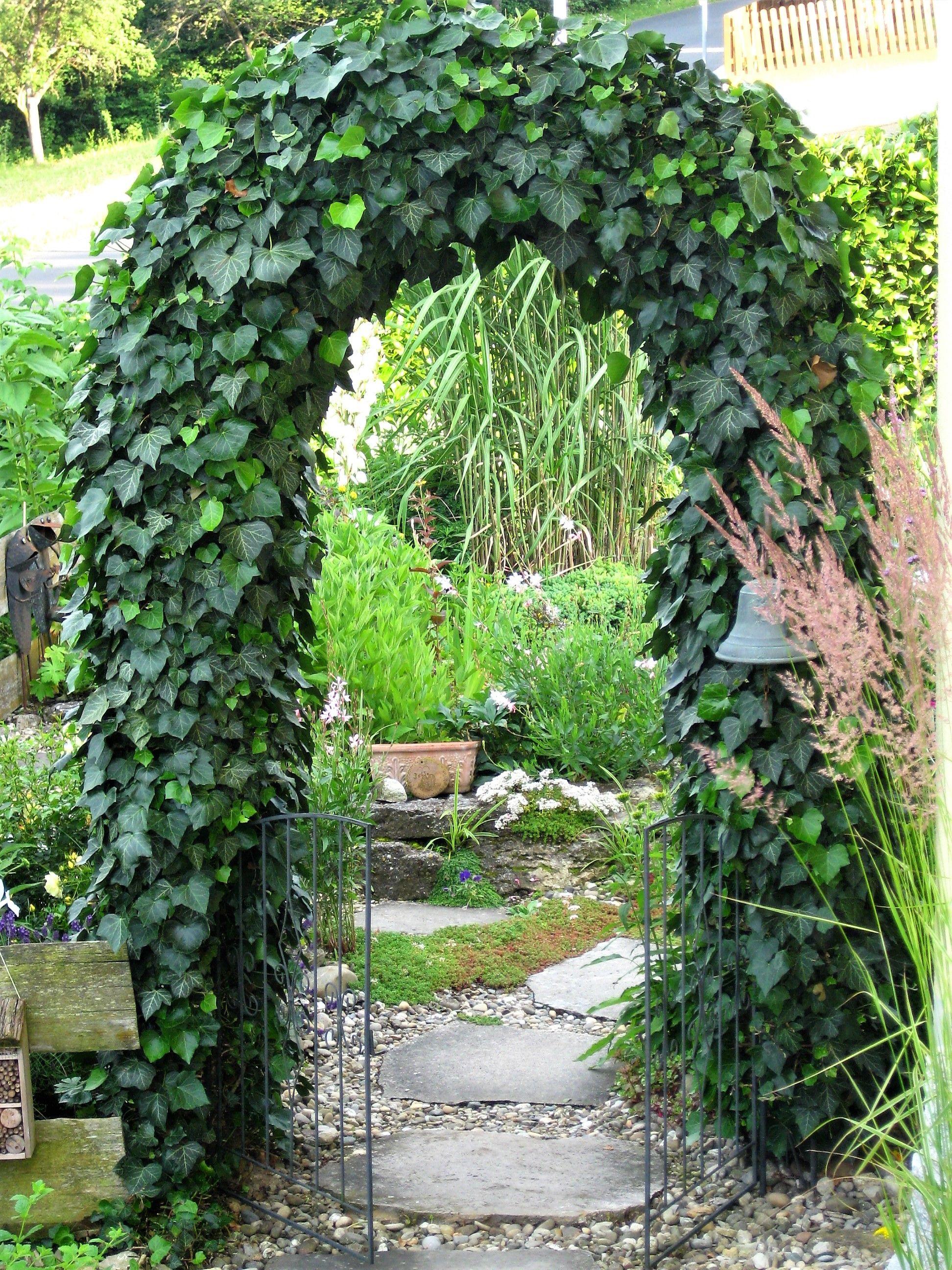 Rosenbogen Efeu Eingang Unsertraumingruen Garten Pflanzen Garten Garten Pavillon
