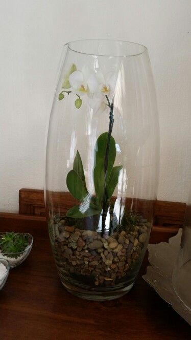 The Big Glass Vase Got A New Use Orchid Terrarium Home