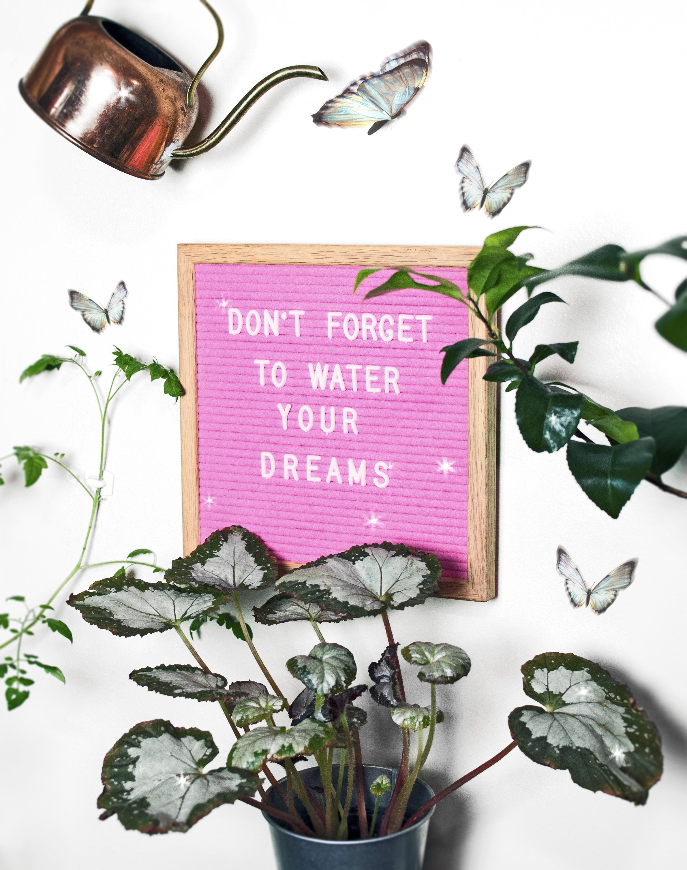 fairytale slavery letterboard quote indoor plants plants