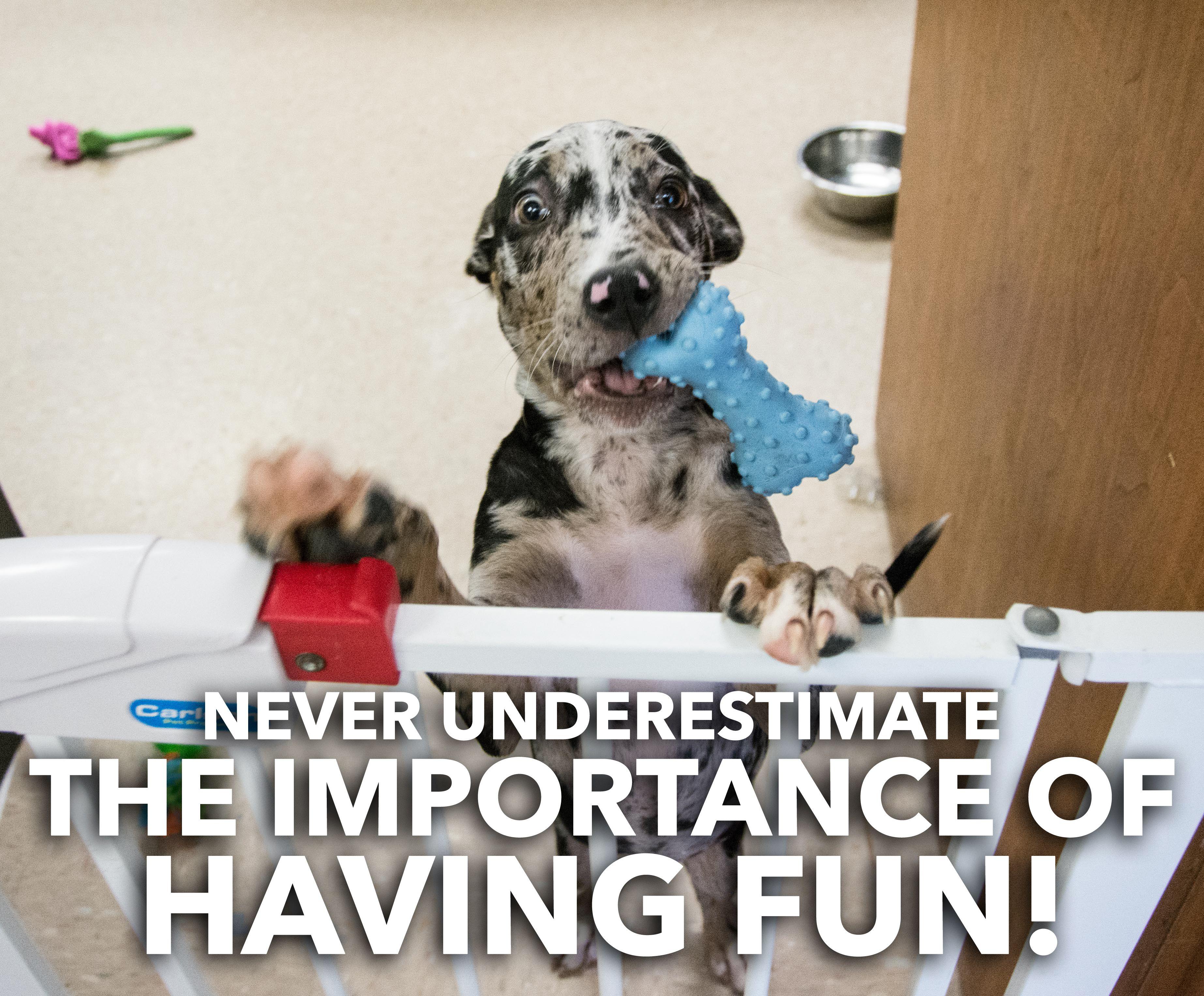 Atlanta Pet Adoption Low Cost Spay Neuter Pet adoption