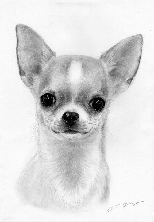 Dejenme Pensar Perros Pinterest Chihuahua Dogs Y