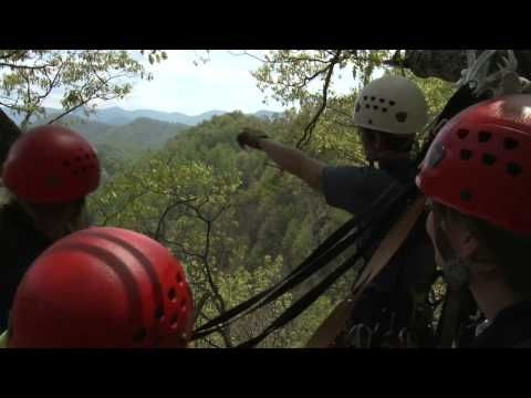 Experience the zipline canopy adventure recognized on CNN in the NY Times and called  one of the best in the nation  in USA TODAY. & Navitat Asheville NC Zipline Canopy Adventure OFFICIAL VIDEO ...