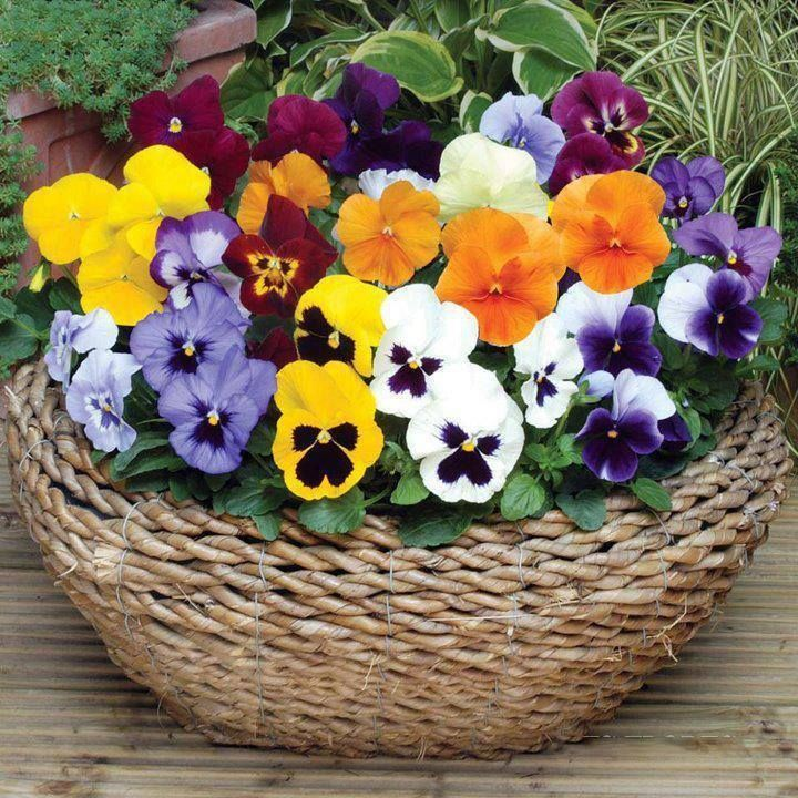beautiful+pansy+arrangements   Found on prettyflowers.me